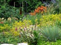 Jeds color plantings