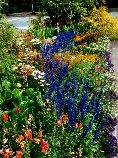 Jeds flowers