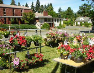 The June 4th Plant Sale will be held at the corner of NE 80th Street in Wedgwood.