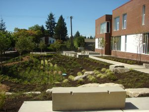 Rain garden along NE 77th Street side