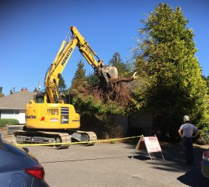 On Monday, September 26th, all shrubbery and trees were being removed from around the building at 8038 35th Ave NE.
