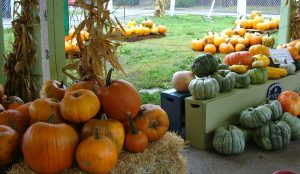 pumpkin-season-2016-in-wedgwood