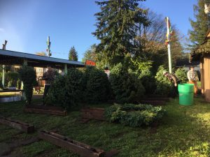 Hunter Farms Christmas Tree Lot