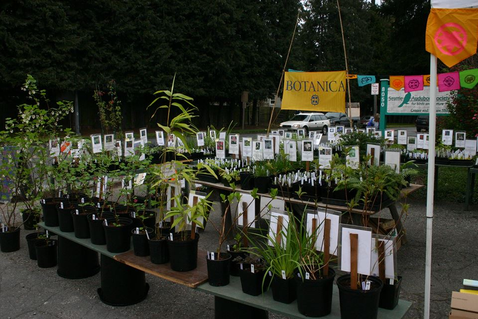 Gear Up For The Spring With Wildlife Friendly Native Plants From A Variety Of Local Nurseries Featuring Botanica Fancy Fronds Queenscup Madrona Nursery